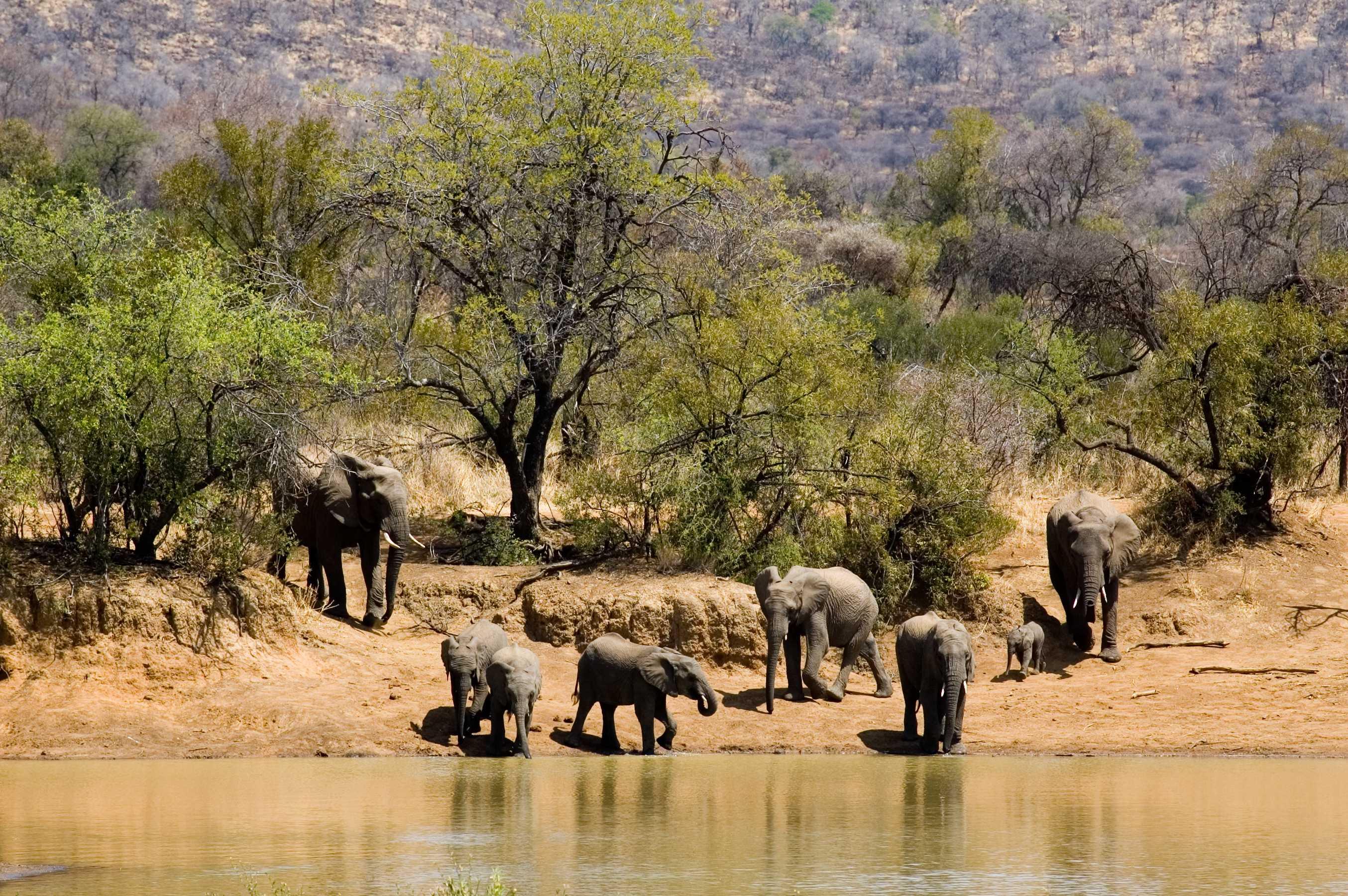 África do Sul: Lendas Pilanesberg - ZA31