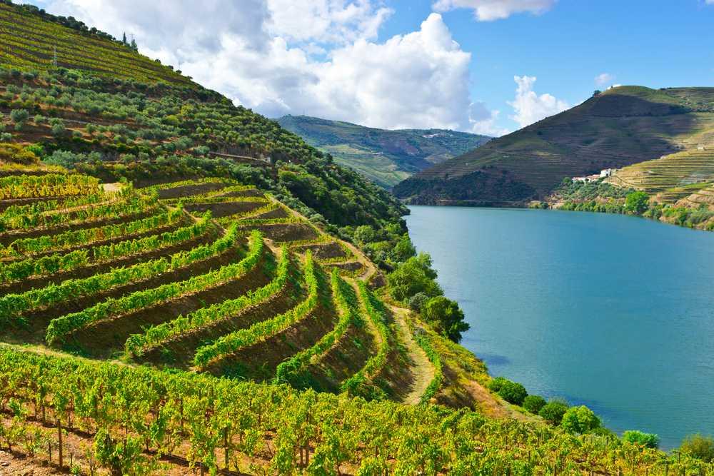 Douro Vínico | Tour Regular de Da Inteiro com Almoço (saída do Porto)