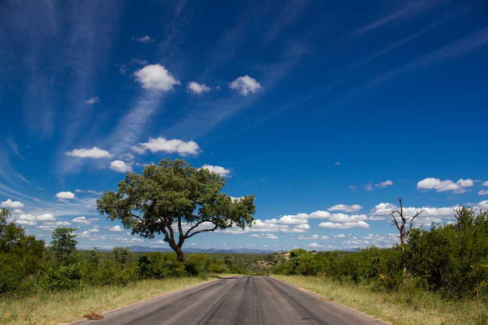 África do Sul: Lendas Jardins - ZA21