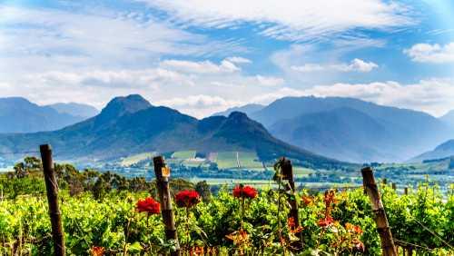 Região do Kruger e Vinhos - ZA41