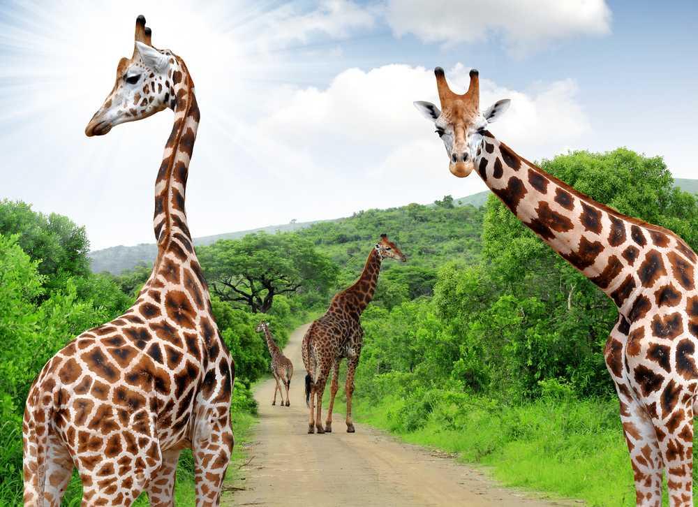 Thanda Africana - ZA27