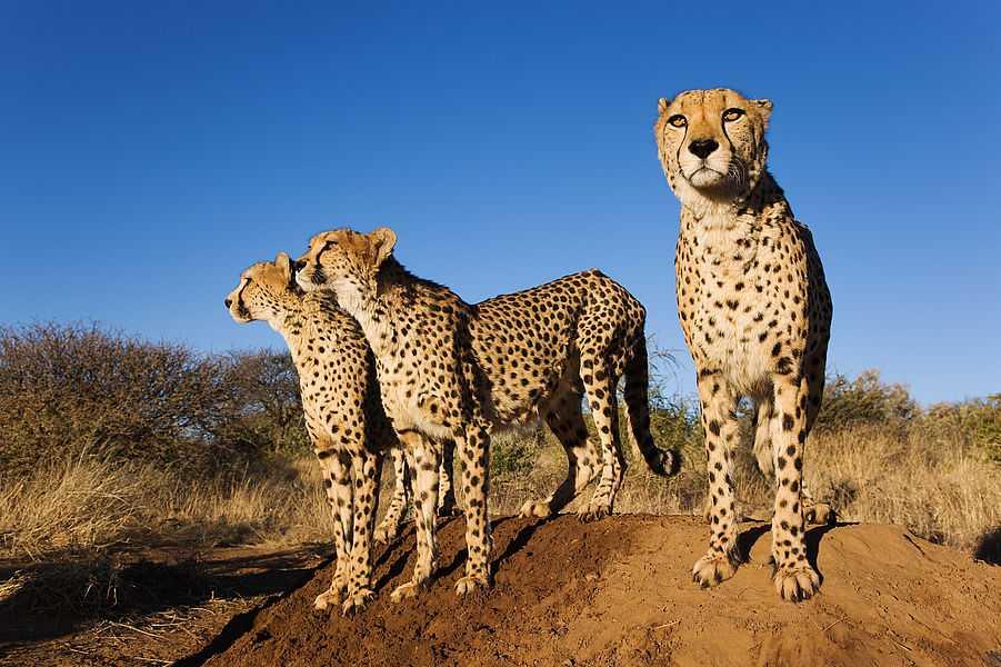 Imersão na África do Sul com Safari - 4 semanas
